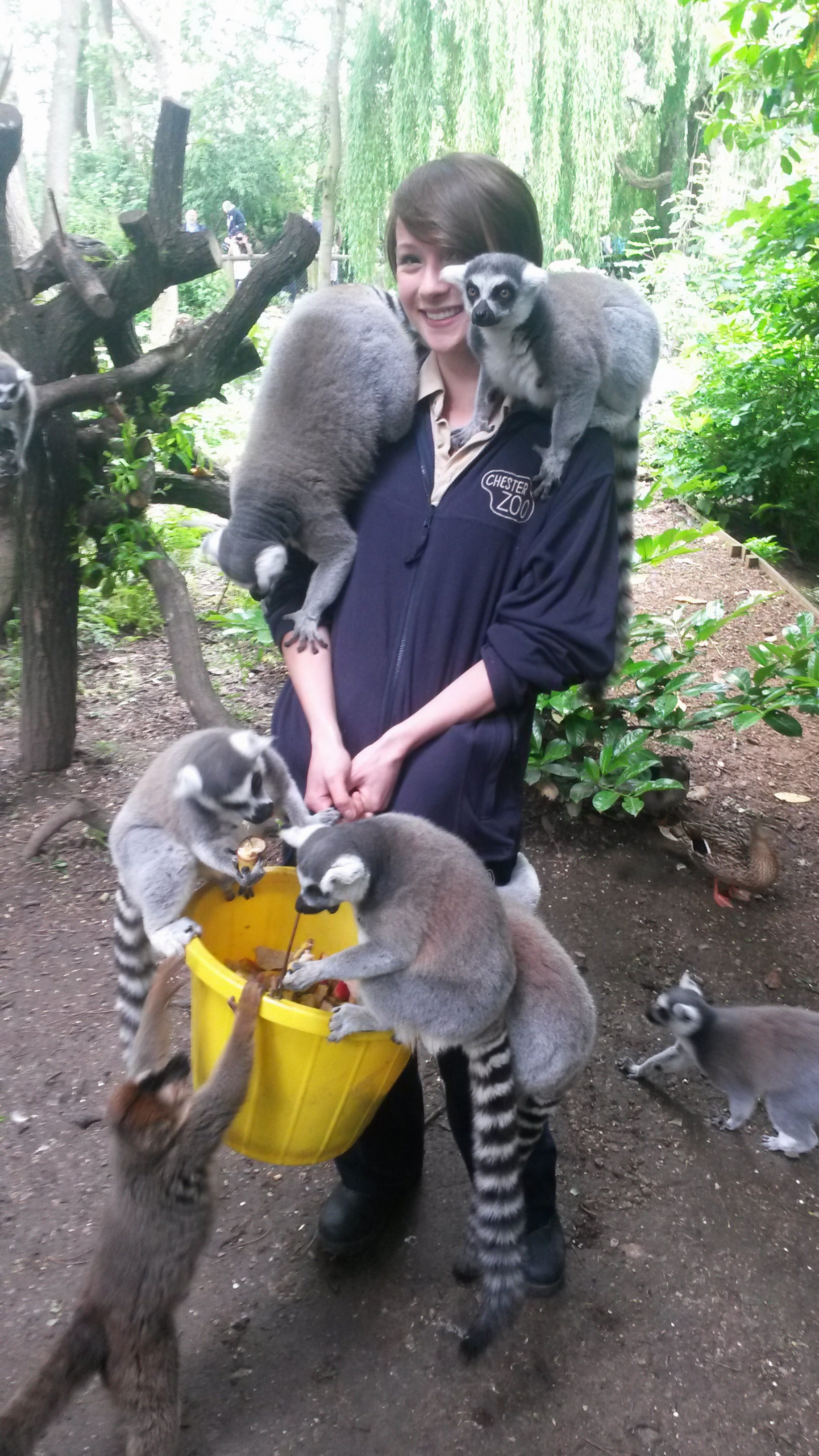 what i did a degree in zoology graduate charlotte tells her charlottelemurs1