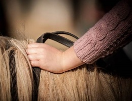 hands holding reins on horse