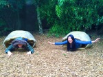 Sabrina Tan: Project Support Intern and the University enjoys a team outing at Chester Zoo.